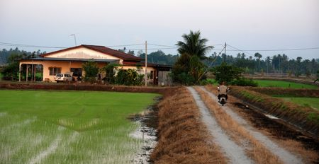 plough machine: road, paddy field and house in the morning at countryside