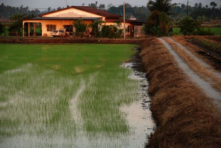 plough machine: house, paddy field and road in the morning at countryside