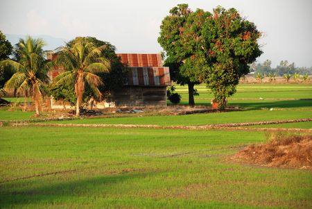 plough machine: trees, farm house and paddy field at the countryside Stock Photo