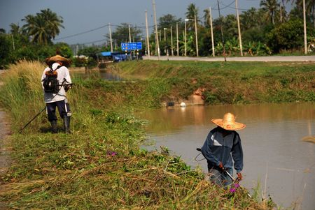plough machine: workers cutting grass, river and coconut trees at the countryside