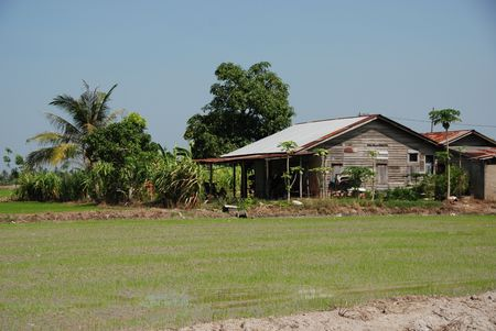 plough machine: coconut trees, house trees and paddy field in the countryside