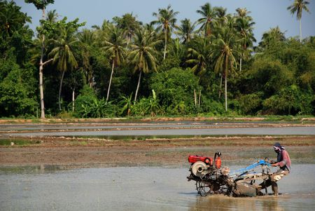 plough machine: coconut trees, farmer driving a plough machine and paddy field at the countryside Stock Photo