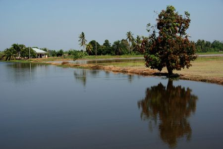 plough machine: river, houses and trees in the paddy field