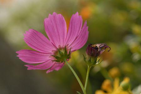 Purplr flower in the park photo