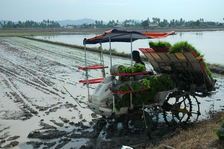 plough machine: planting machine and paddy field at the countryside