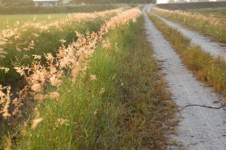 plough machine: wild flowers and road at the countryside