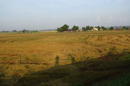 plough machine: house,paddy field and trees at the countryside