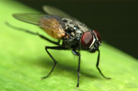 housefly: housefly inside the gardens                                  Stock Photo