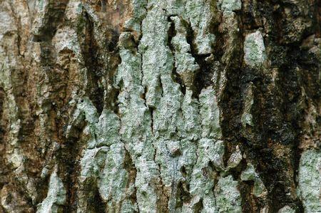 trunk  tree: tronco de �rbol en los jardines