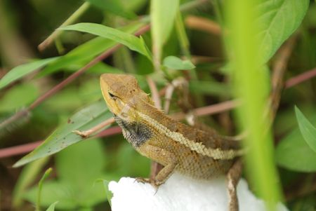 lizard in field: lagarto en los parques