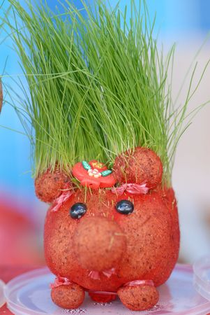 young wheat grow on the doll head