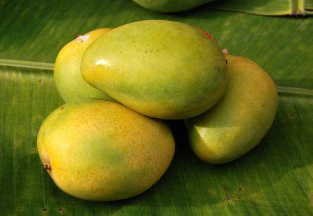 Mango op de vruchten te slaan
