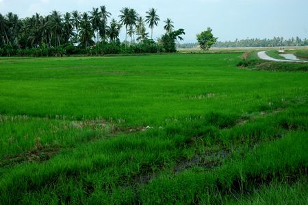 farm house: farm house, paddy field and trees at the countryside Stock Photo