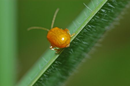tiny beetle in the parks                              photo