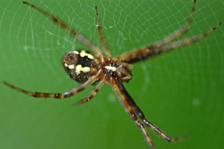 garden spider: a small spider in the middle of the parks                 Stock Photo