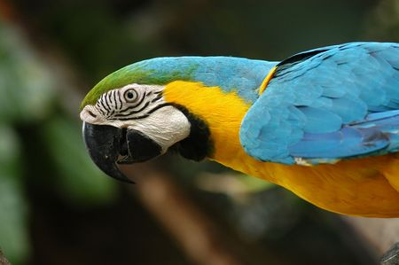 pigeon egg: colorful parrot in the parks Stock Photo