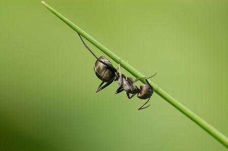 black ants in the gardens  Foto de archivo