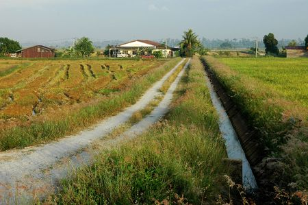 farm house: river, farm house, paddy field and trees at the countryside