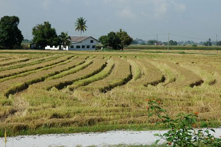 plough machine: farm house, paddy field and coconut trees at the countryside Stock Photo