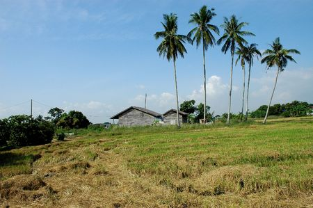 farm house: farm house, paddy field and coconut trees at the countryside Stock Photo