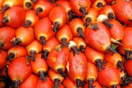 palm zaden op de vloer