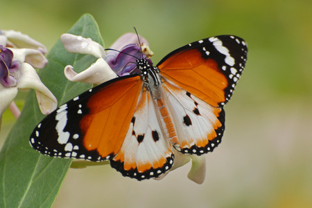 Beautiful butterfly and flowers in the gardens  Stock Photo