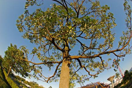 big tree and skies Stock Photo - 1684445