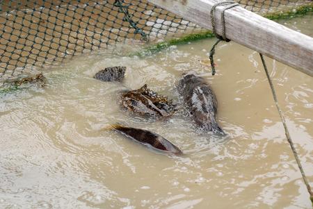 Fish in the fishing farm Stock Photo - 1705283