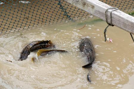 Vis in de visserij-boerderij Stockfoto