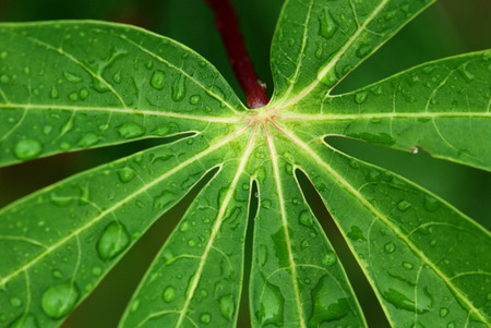 water droplet and green leaf in the parks