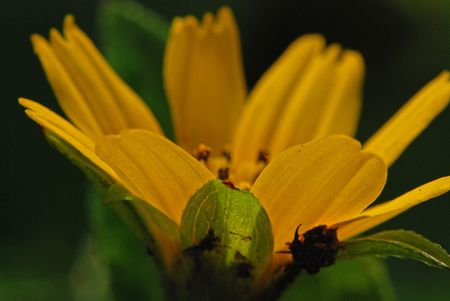 yellow flowers in the gardens photo