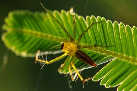 eight legs: spider and green leaf in the gardens