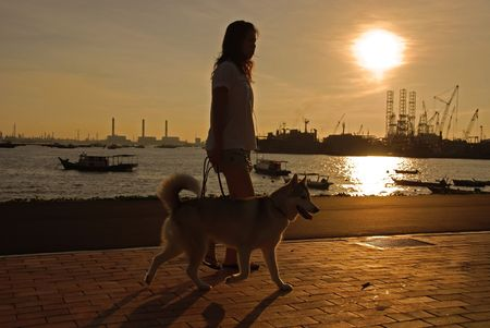 sunset, dog and woman at the seaside photo