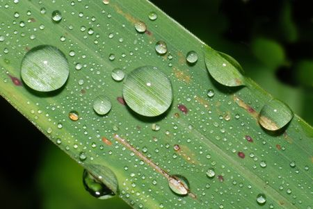 green grass and water droplets in the parks photo