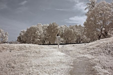 forest railway: Infrared photo – tree, skies, flower in the parks  Stock Photo