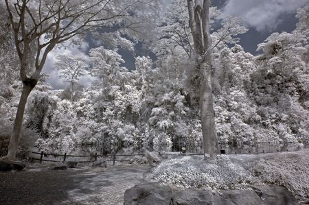 Infrared photo � tree, skies, water, lake, flower in the parks  photo