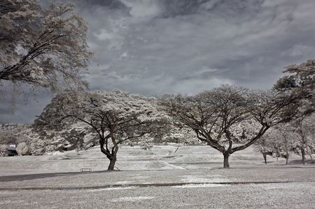 Infrared photo – tree, skies, flower in the parks  photo
