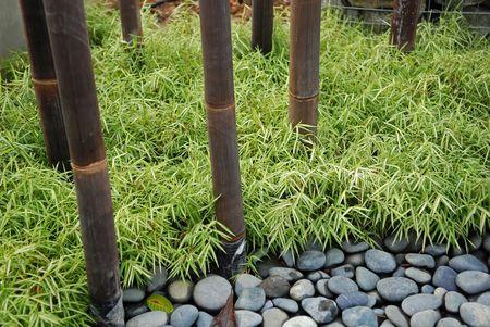bamboe en groene plant in de parken