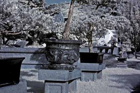 ir: Infrared photo � garden, flower and tree in the parks