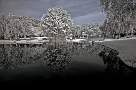 ir: Infrared photo – tree, skies and lake in the parks