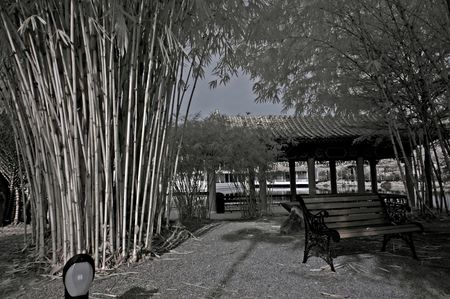 ir: infrared photo - tree, bamboo and hut in parks Stock Photo
