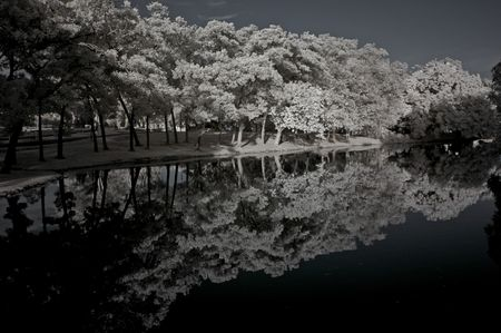 Infrared photo � tree, lake and cloud in the parks  photo