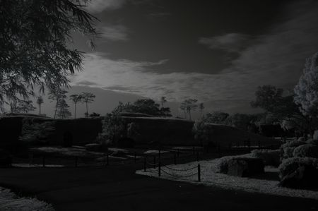 Infrared photo � tree, house and cloud in the parks  photo