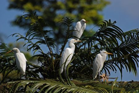 Little egret standing on the tree in the parks photo