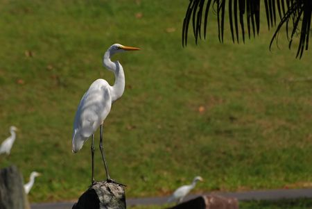 Little egret standing on the rock in the parks photo