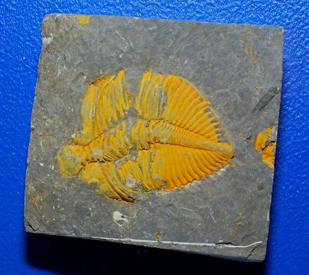 Ancient animal, fossil of fish photo