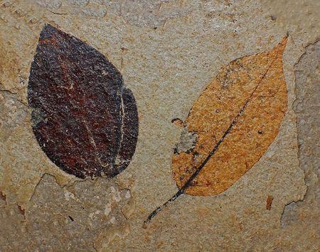 Oude fabriek, fossiele bladeren van de boom