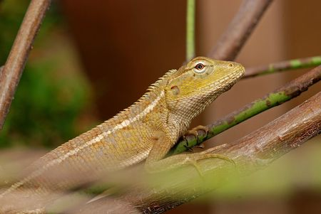 lizard in field: pequeña lagartija en los jardines