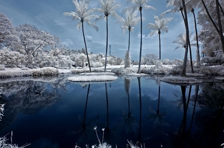 ir: infrared photo - coconut tree, lake and sky in the parks Stock Photo