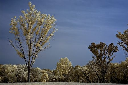 ir: Infrared photo – sky, landscape and tree in the parks Stock Photo